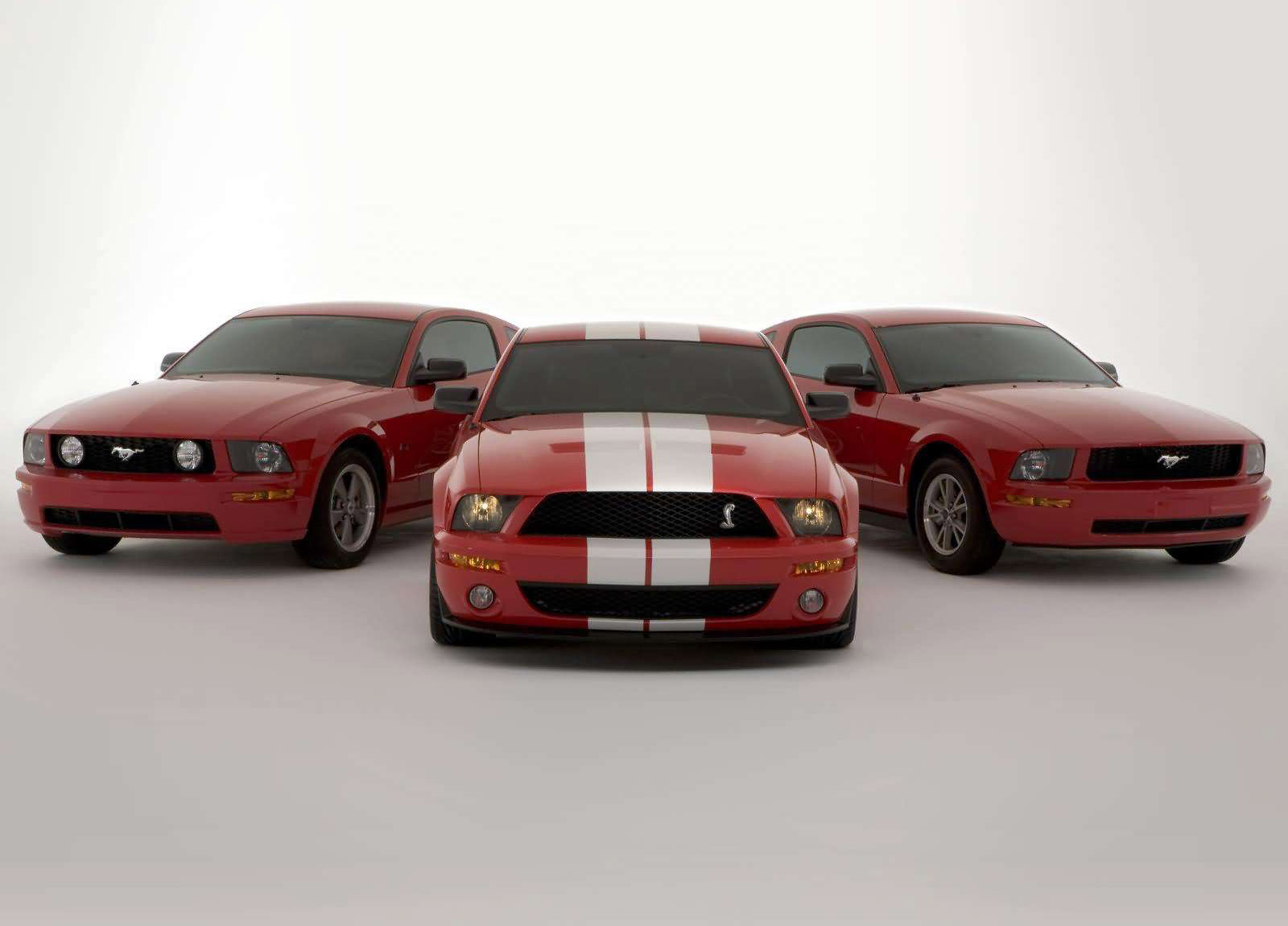 2005 ford shelby svt cobra gt500 mustang show car hd pictures